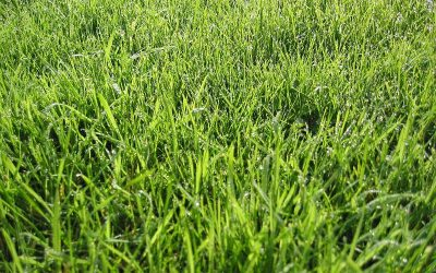 Now's the Time to Get Your Lawn Ready for a Green, Green Summer!